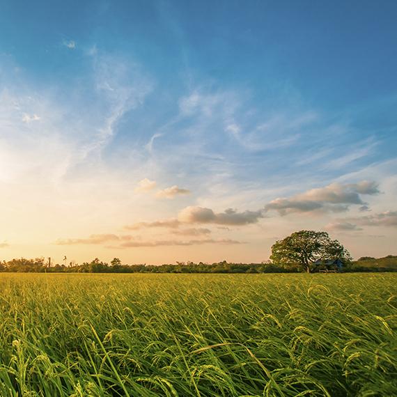 L'énergie GPL devient progressivement renouvelable